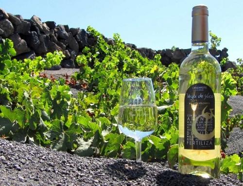 El 1er vino del hemisferio norte se presenta en la Pequeña D.O. Lanzarote