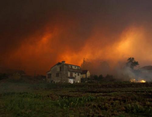 Preocupación en las Pequeñas D.O.'s del Noroeste de España por la ola de incendios forestales