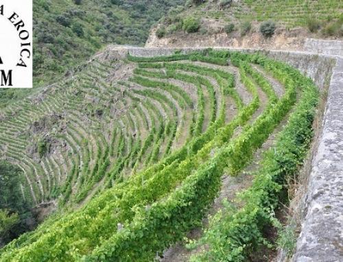 22 vinos de nuestras Pequeñas D.O.'s premiados en la 25ª edición de los Premios CERVIM