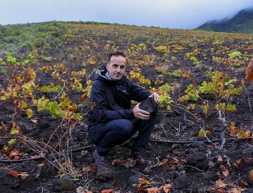 El 'Master of Wine' David Forer destaca la identidad única de los vinos de la D.O. El Hierro