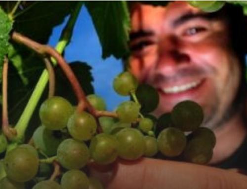 La viticultura gallega a debate el próximo 26 de enero en Pontevedra