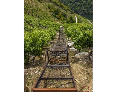 19 medallas del CERVIM en el Mondial des Vins Extremes para los vinos de la Pequeña D.O. Ribeira Sacra