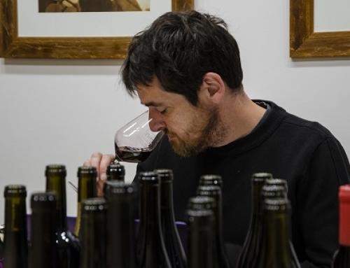 66 vinos de la Pequeña D.O. Ribeira Sacra obtienen más de 90 puntos en la Guía Peñín 2019