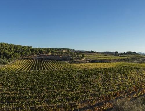 Mas Edetaria Selecció primer vino de Finca de la Pequeña DO Terra Alta