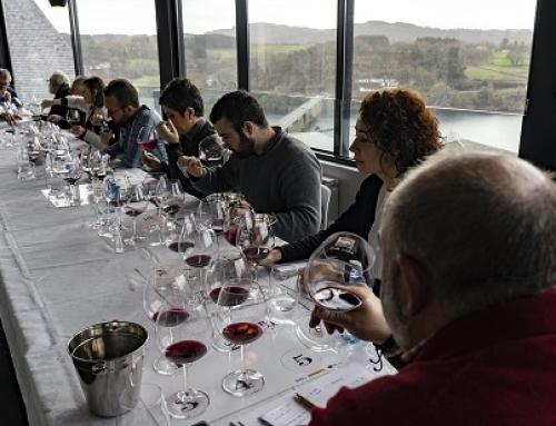El panel de expertos de la Pequeña DO Ribeira Sacra califica la añada 2019 como MUY BUENA