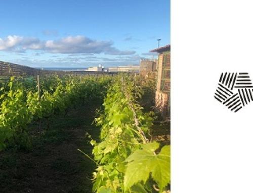 Los vinos de la Pequeña DO Gran Canaria se reinventan para salir de la crisis