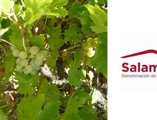 La uva Rufete Serrano Blanco, es reconocida en el BOE y la Pequeña DO Sierra de Salamanca confía hacer vinos con esta variedad