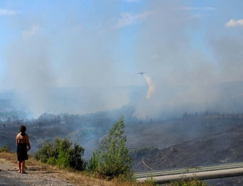 Solidaridad con la Pequeña DO Monterrei por los incendios