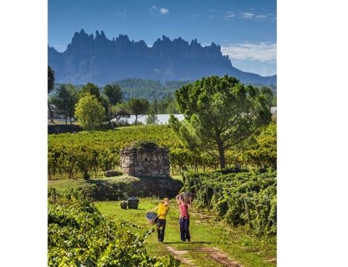 Bages Turismo y la Pequeña DO Pla de Bages crean una Ruta del Vino para convertir la comarca en un referente del enoturismo cultural