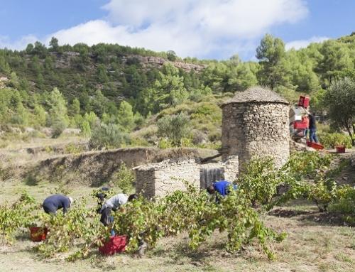 El camino de la trashumancia de Aviñón y el vino de tina de Abadal reciben el premio Vive la Piedra Seca de la Pequeña DO Pla de Bages