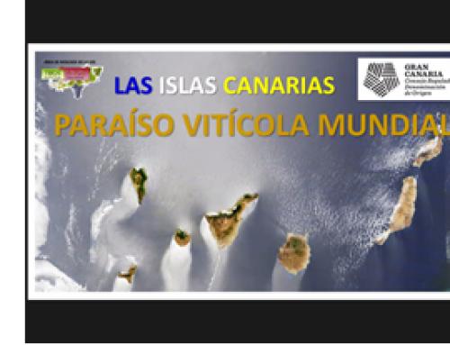 La Pequeña DO Gran Canaria, celebra un curso sobre las variedades de uva en las islas