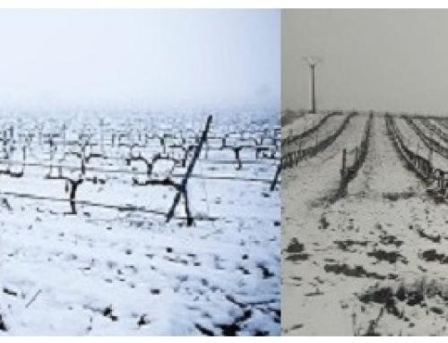 """El paso de """"Filomena"""" deja varias de nuestras Pequeñas D.O.'s cubiertas de nieve"""