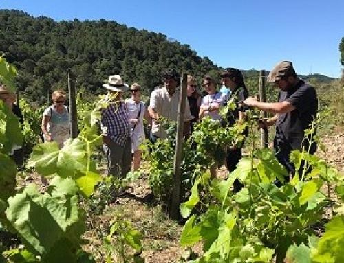 La Pequeña DO Tarragona presenta hoy jueves su Ruta del Vino